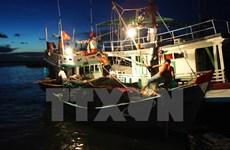 年初至今坚江省海洋捕捞产量达41.1万吨