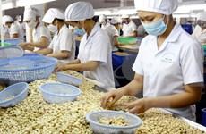 越南腰果产业努力保持世界第一腰果出口国的地位