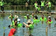 东盟举行红树林种植日