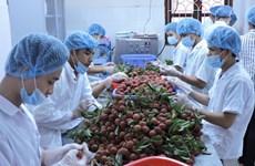 越南寻找措施推动水果出口外销