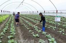 越南着力促进农业合作社发展