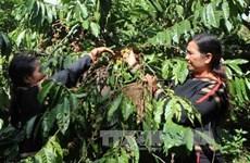 越南西原地区经济社会保持增长势头
