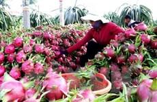 越南蔬果出口创奇迹 首次超越原油出口额