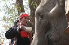 莫侬族的大象祭拜习俗