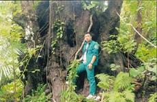 昆山岛国家公园3大古老树木被列入越南遗产树名录