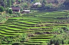 北𣴓省推进农业结构调整