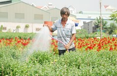 广义省花农开始忙碌起来  让春节时花开满满