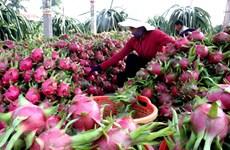 《越南水果出口中国指南》亮相