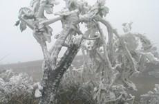谅山省母山连续两天出现冰冻天气  各单位积极做好防寒防冻工作