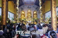旅居世界各国越南人纷纷举行迎新春活动