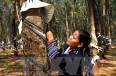 越南橡胶产量与出口量位居世界第三