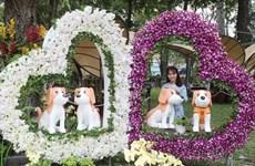 胡志明市2018戊戌年迎春花卉节开幕