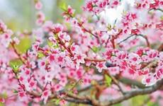 新春催促与呼唤