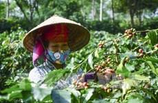 山罗咖啡品牌立足国内市场