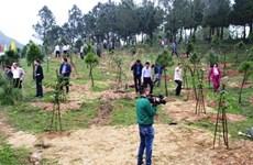 承天顺化省努力完成2018年的森林资源保护与发展任务