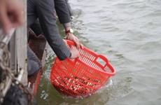 河内市举行规模巨大的放生仪式 鱼量超过五吨