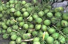 槟椥椰蓝椰子产品获得地理标志登记证书
