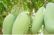 2018年前2个月越南蔬果出口额约6.2亿美元