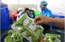 岘港市试点展开在食品包装上印上二维码