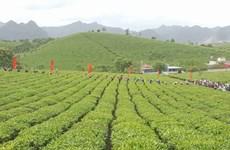 2018年第三次木州茶叶节有助于打造木州名茶品牌