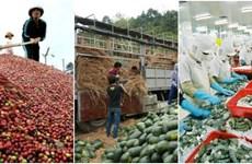 越南走向农林水产品可持续出口