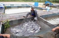 前5月越南水产品捕捞产量增长2.4%