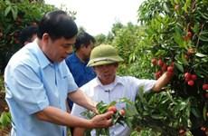 农业与农村发展部部长阮春强:继续采取措施推进荔枝销售