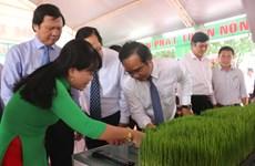 第一届九龙江三角洲水稻节在隆安省举行