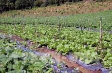 广治省吸引诸多高科技农业项目