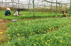 今年前6月芹苴市农业生产增长率较高
