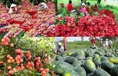 扩大越南水果对中国出口