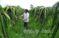 台湾企业与越南进行农业投资合作活动