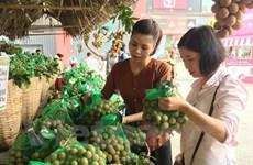 龙眼采摘季节即将到来  兴安省和山罗省举行多场龙眼促销活动