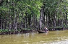 采取措施恢复越南自然林生态系统