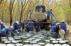 越南橡胶出口价格呈现下降势头