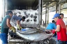 2018年前7月越南金枪鱼出口额达3.51亿美元 增长11%