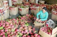 中国一直是越南农产品颇具潜力的市场