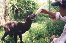 加强国际合作 促进濒危野生动物保护