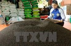 今年前8个月越南胡椒出口量增长3.2%