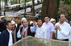 阮春福总理:玉玲人参是越南国宝