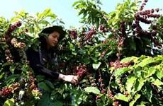 着力挖掘越南与非洲的经贸投资合作潜力