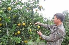 和平省将举行特色水果推介活动