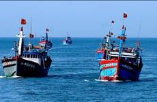 """为渔业解除欧盟""""黄牌""""警告做出努力"""