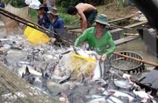 越南查鱼对美国出口激增