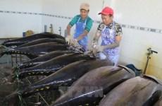 越南金枪鱼颇受中东消费者的青睐