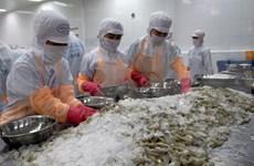 越南白脚虾对欧盟的出口保持上升态势