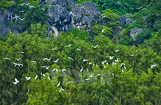 越南自然与环境保护协会致力于越南可持续发展事业