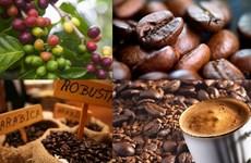 2018年前11月越南咖啡出口量达173万吨  创汇33亿美元