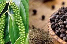 世界胡椒协会代表赴越南进行市场开发