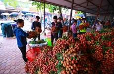 越南农产品对欧盟出口空间广阔